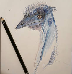 ~Quick Sketch Emu~ by forestwolfcreations