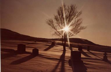 Tree of Life by Nightwalker50