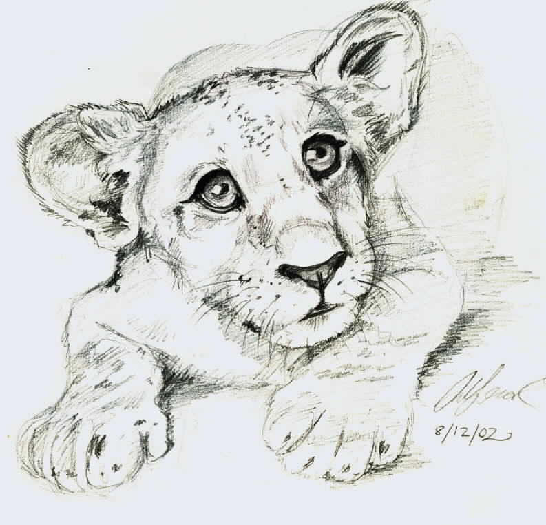 ... about lion sketches on Pinterest | Lion Sketch, Lion Drawing and Lion