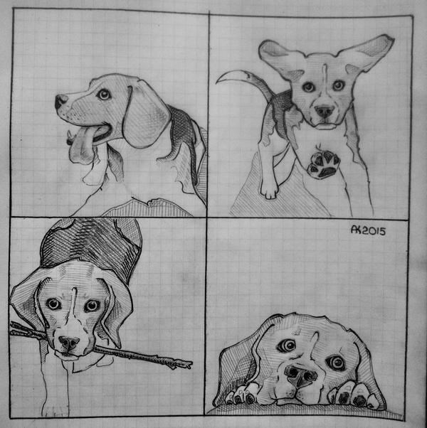Good boy (beagle) #3 by albina29
