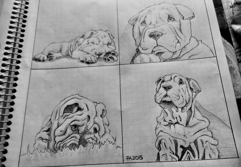 Good boy (Shar-Pei) #4 by albina29