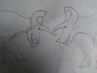 Triceratops stand off by Dromeothetroognathus