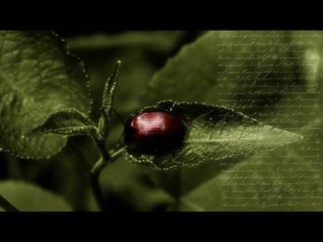 love bug...