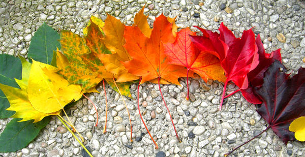 Rainbow of Autumn by lani-heartcore