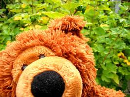 Hello Teddy by lani-heartcore