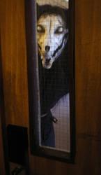 Don't open the door... by tarangryph