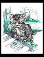 .: Cutest Cat :. by anachsunamon