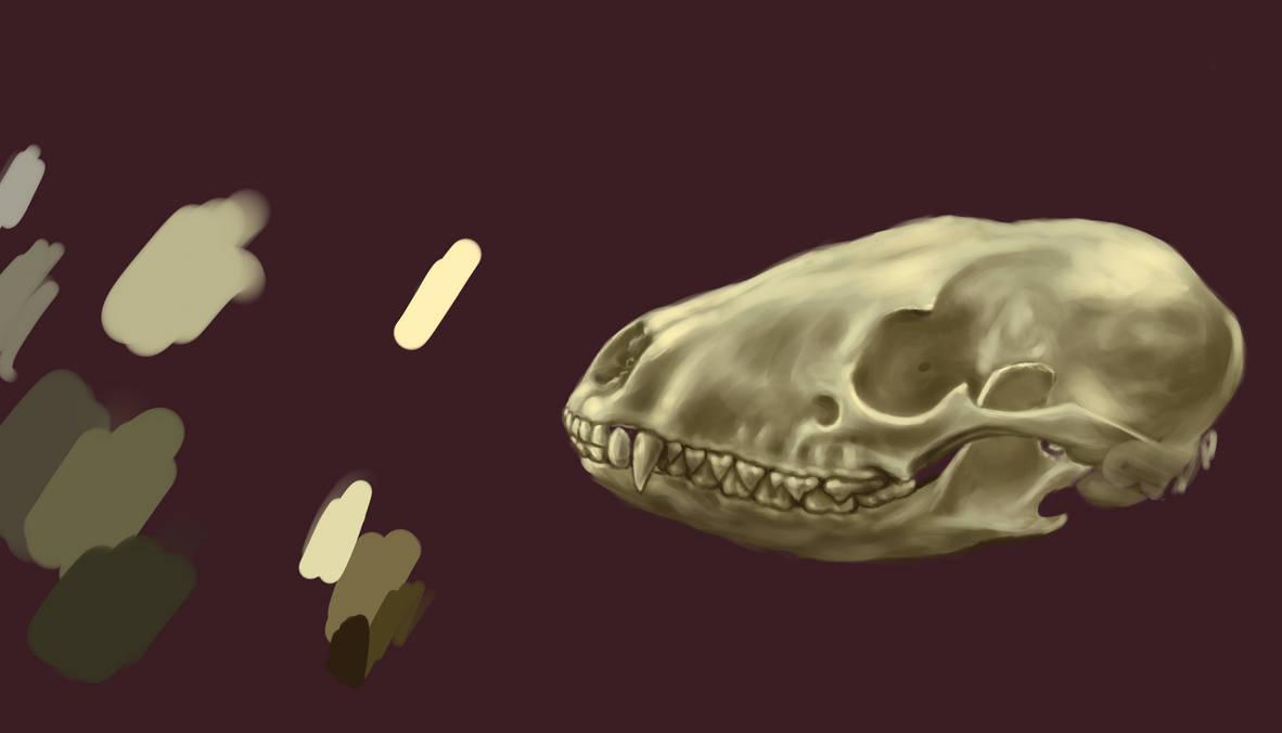 Digital painting skull practice by borschtplz
