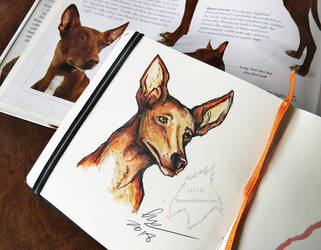Pharaoh Hound by TorturedChicken