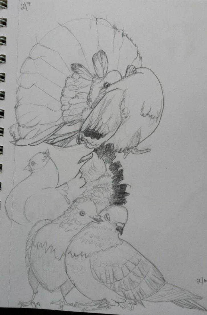 Sketchbook Pigeons by TrippyState