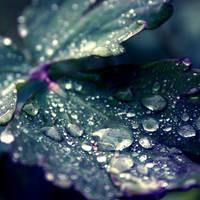 Dew by will-jum
