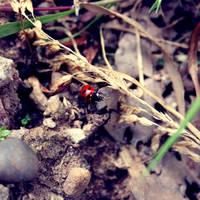 Ladybird by will-jum