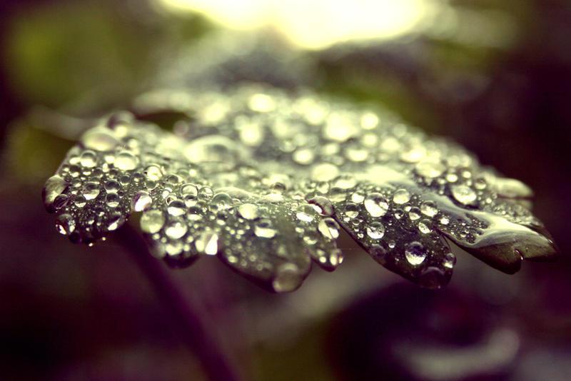 Dew Drop's by will-jum
