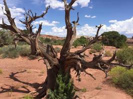 Dead Tree by XLittleDoveX