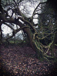 Twisted Branches  by XLittleDoveX