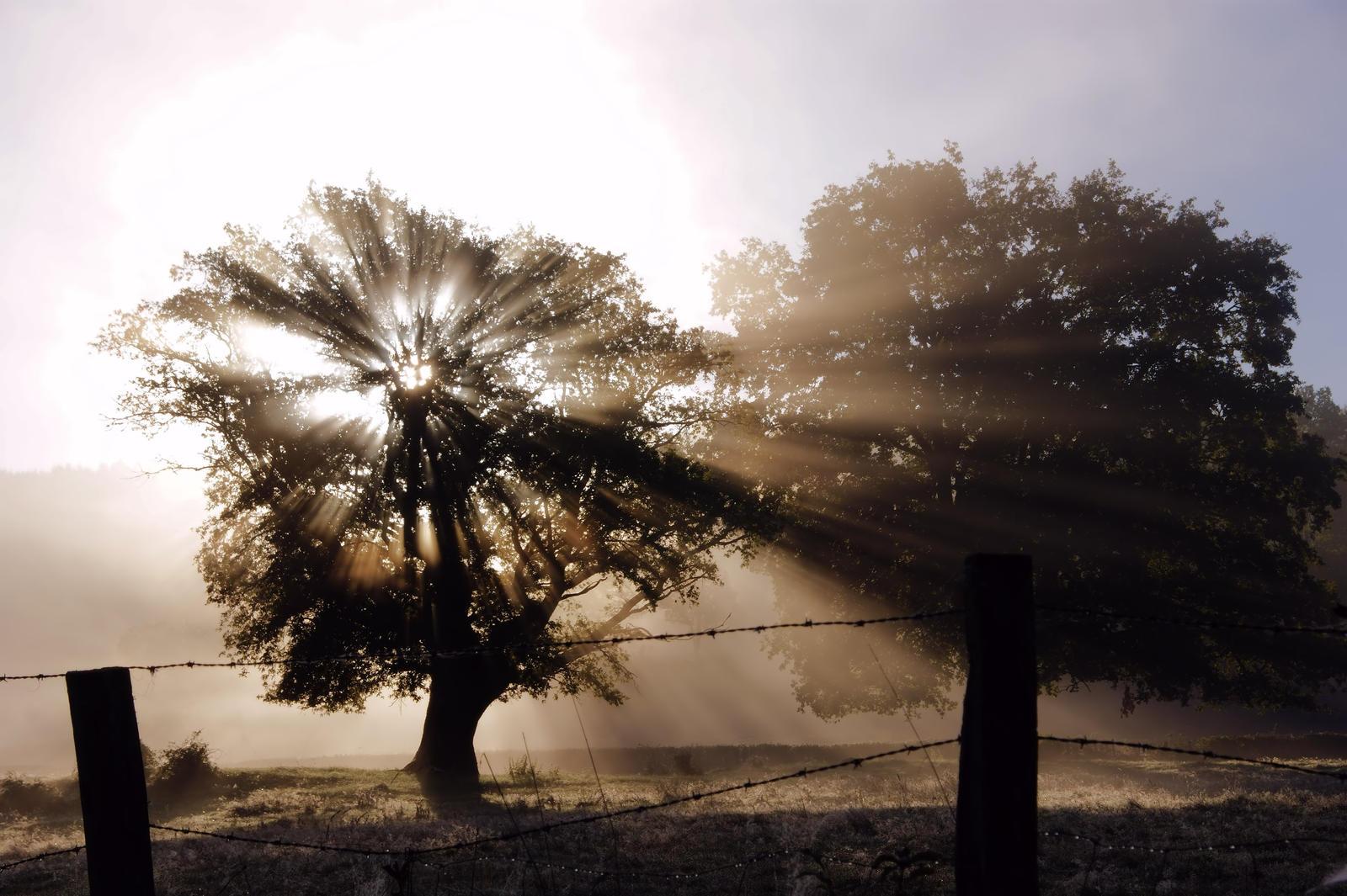 Radiant tree by SjerZ