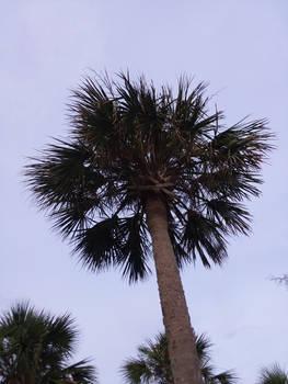 Palm Tree WEV