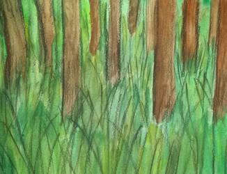Tall Grass Near Woods