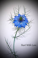 Love In A Mist. by F-art-Photography