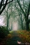 Into the Mist by AsianWhitegirlX