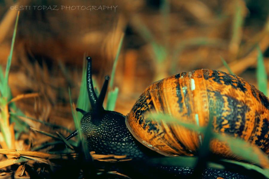 Snail 2 by st277