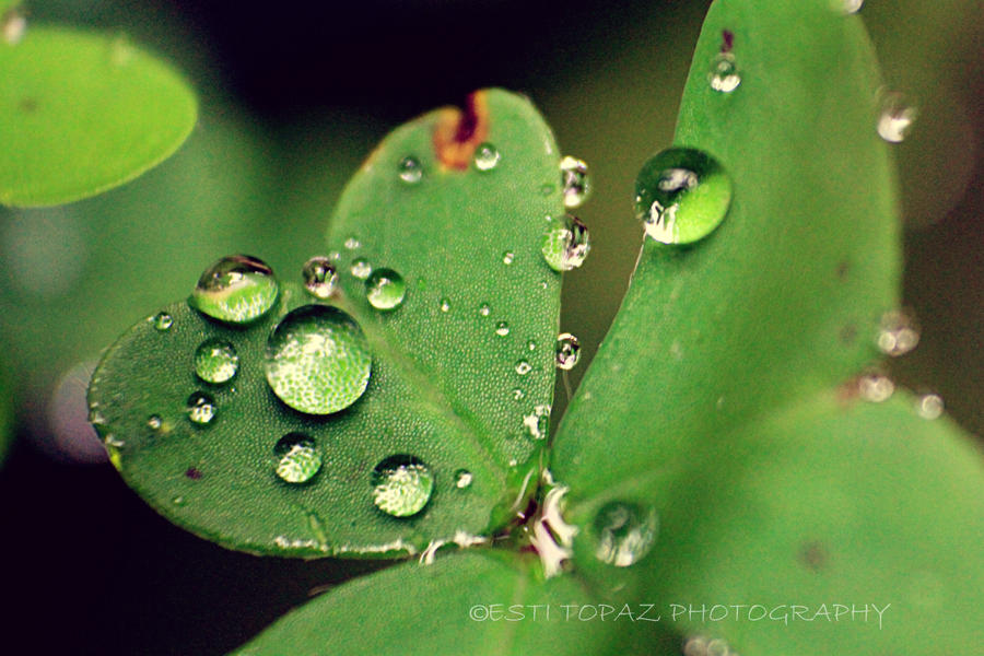 Drops by st277