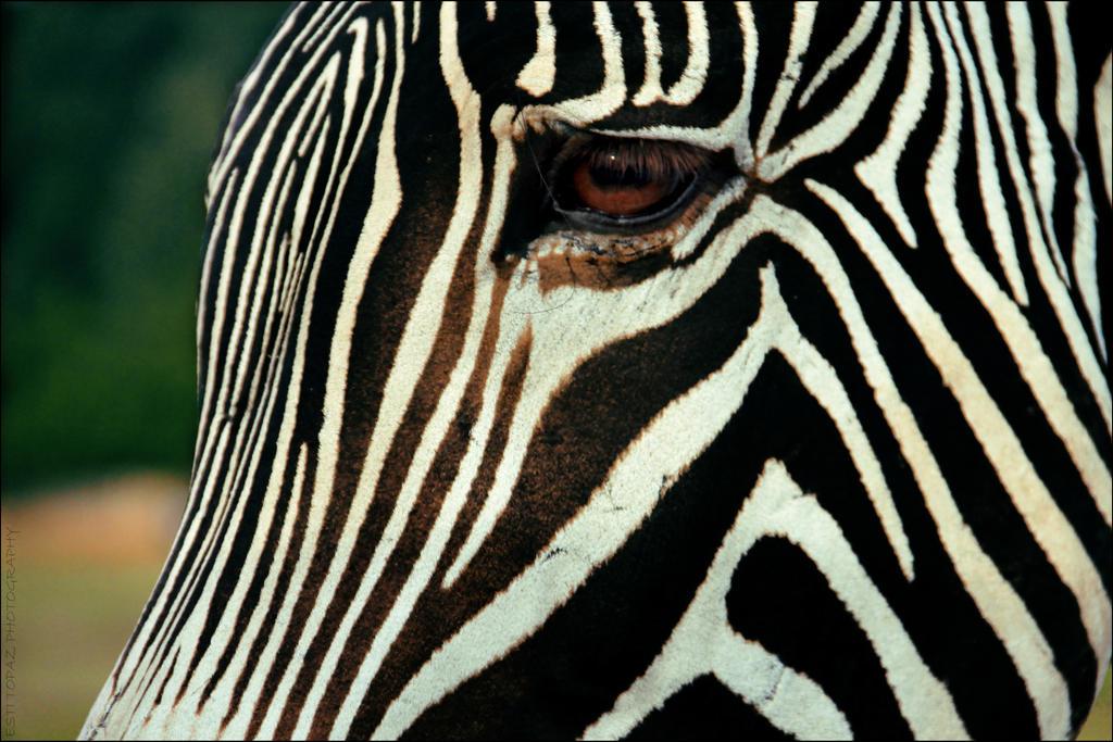 Stripes by st277