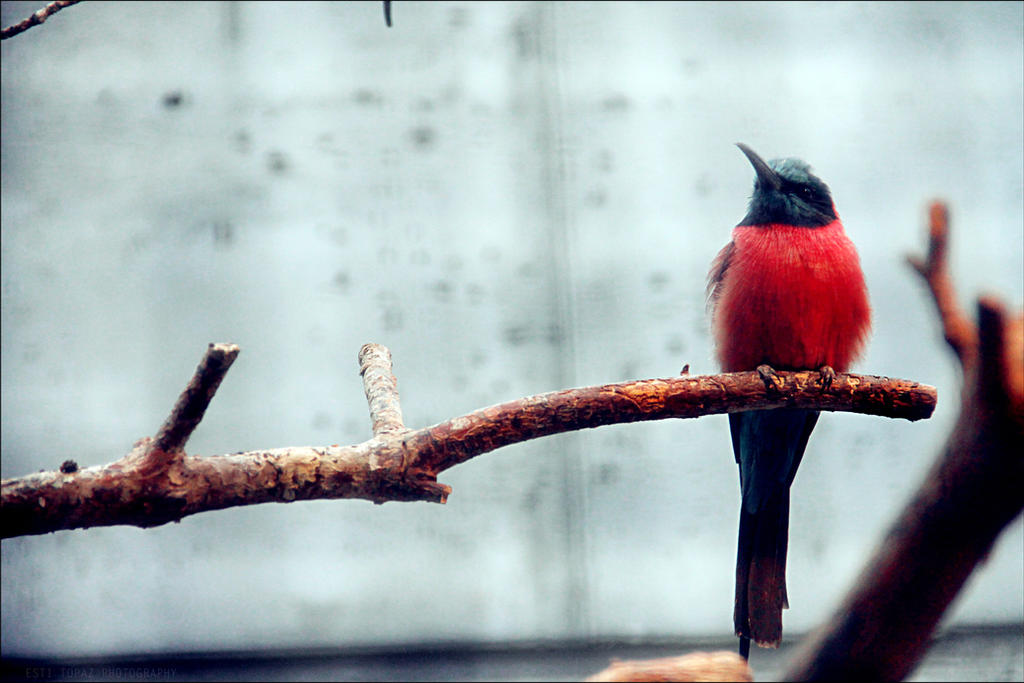 BIRD by st277