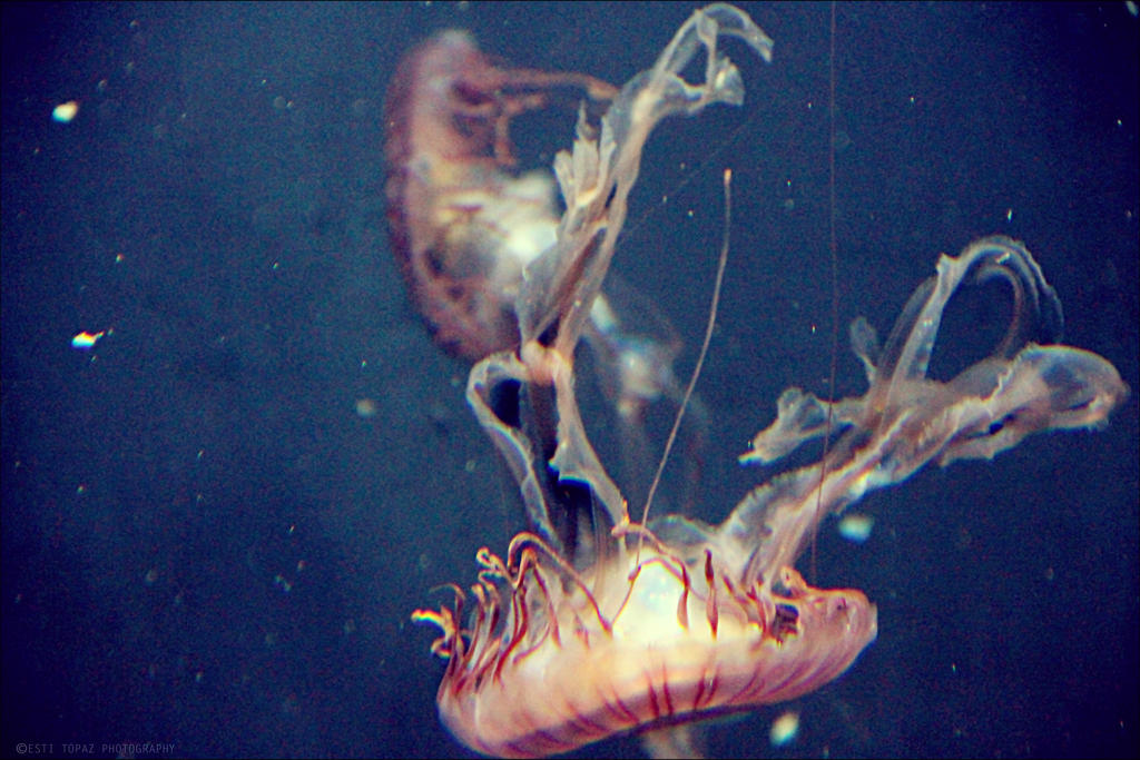 Jellyfish by st277