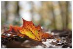 Automne - Autumn