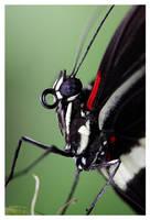 Alien vs Butterfly by devknu