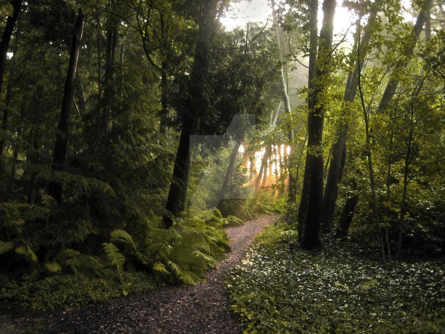Forest by SergietsDmitry