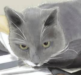 Kitty closeup by EvilAnemone