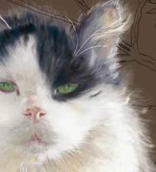 Fence Cat step 2: closeup by EvilAnemone