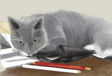 Kitty -- Pretty final by EvilAnemone