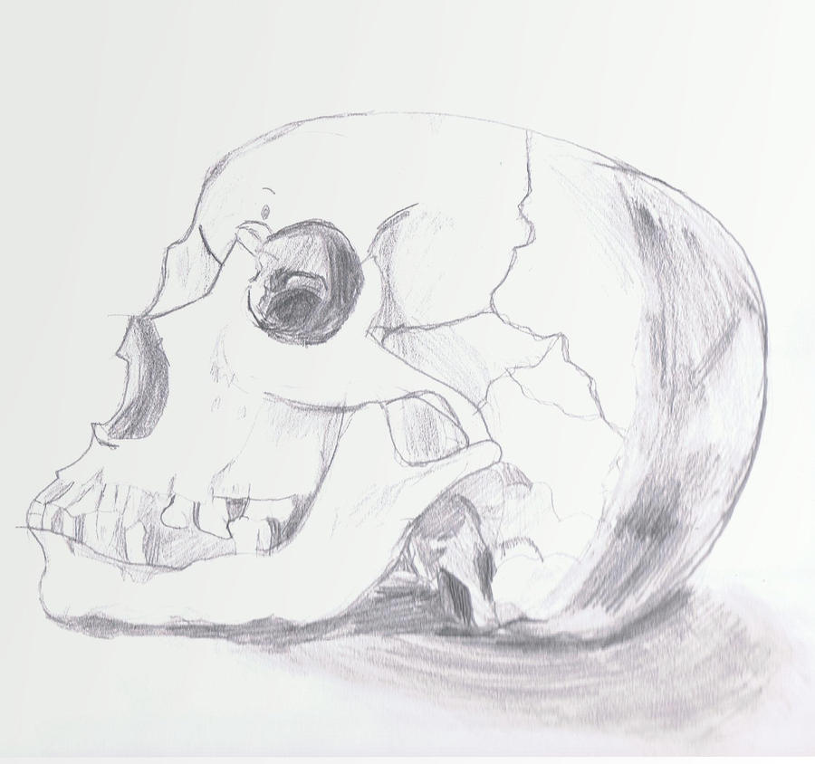 Skull by yanderyou