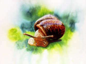 snail by tsukasa1608