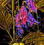 The Fairy's hidden Lair