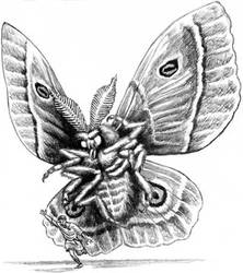Crimson Moth Monster Pencil Drawing available