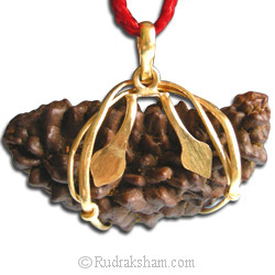 Buy 1 Mukhi Rudraksha Online by rudraksham