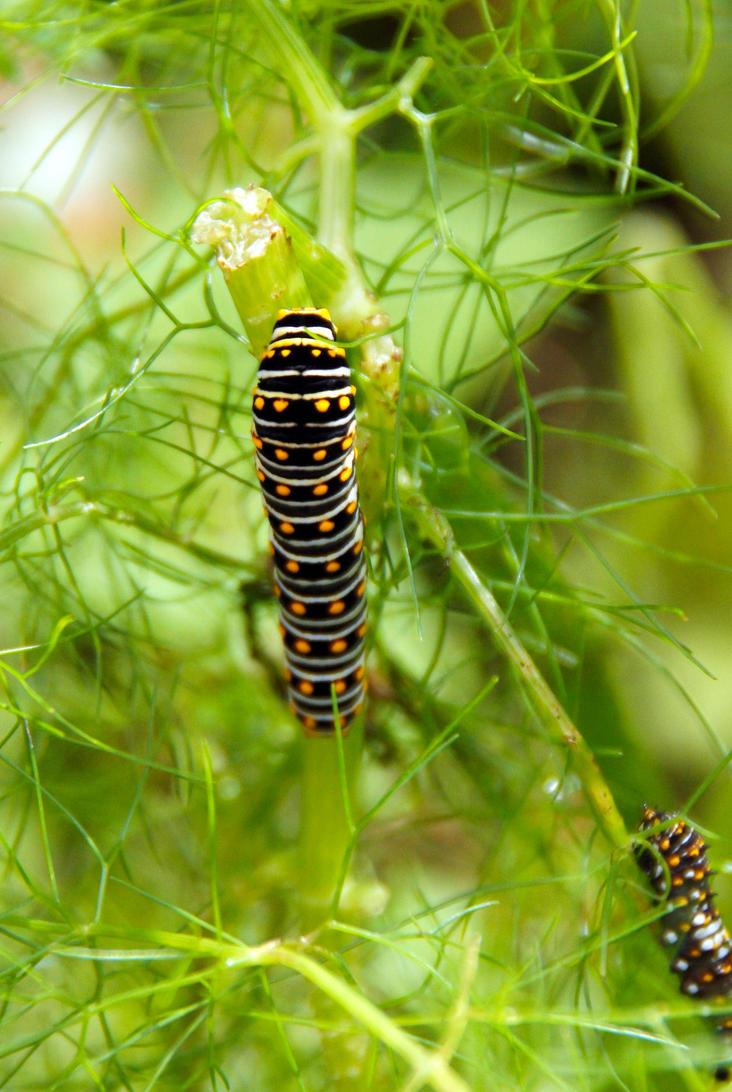 Catterpillar by luckyseven11779