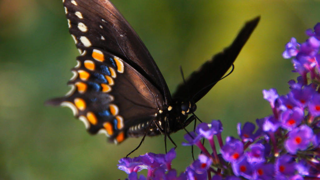 Butterfly 3 by luckyseven11779