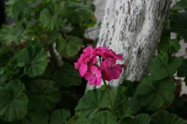 Flor en el camino by ayanami89