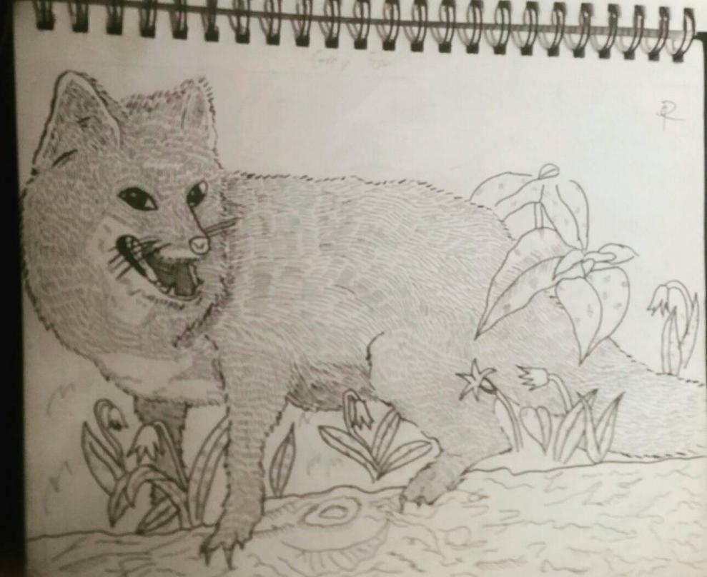 Fox by OopsMyArtIsShowing