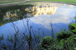 pond by Tiger--photography