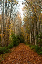 Galloping Goose Trail Autumn Picture by Lastsongofvalderie