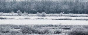 Dreamy Snow by Milan-R