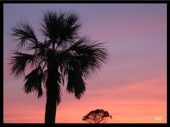 Palm Tree. by fukksistero1