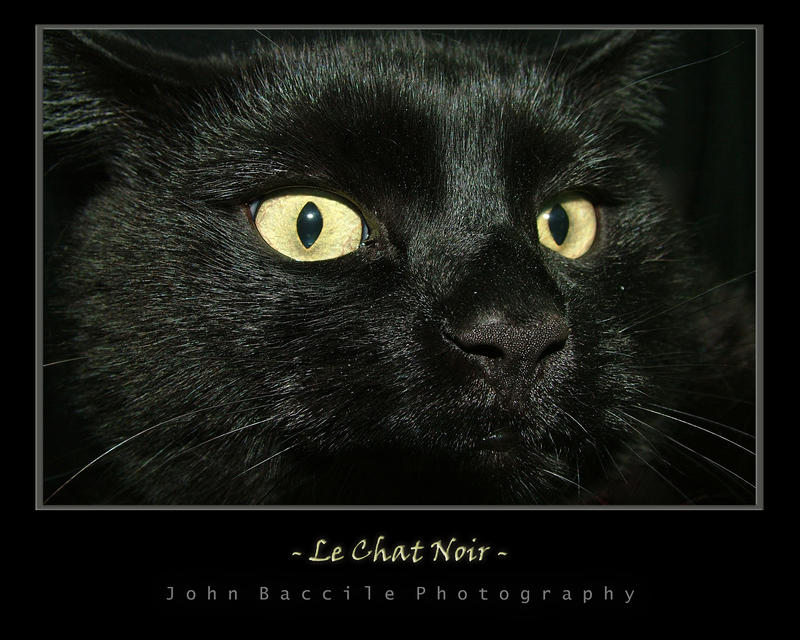 Le Chat Noir By Barefootphotography On Deviantart