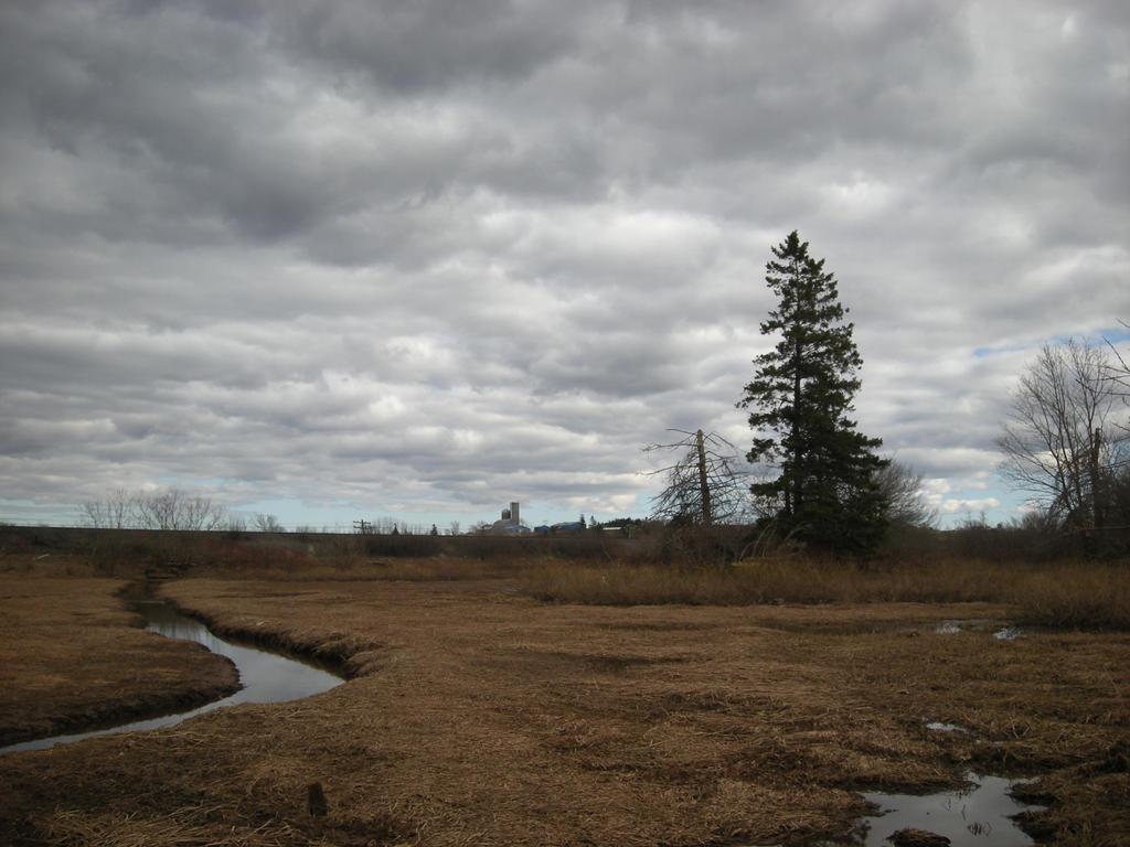 april field by ShawnaMac